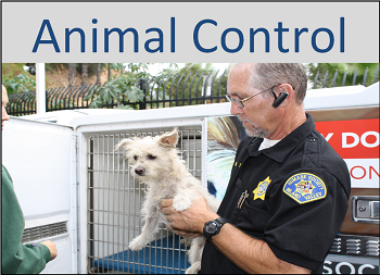 animal control.png